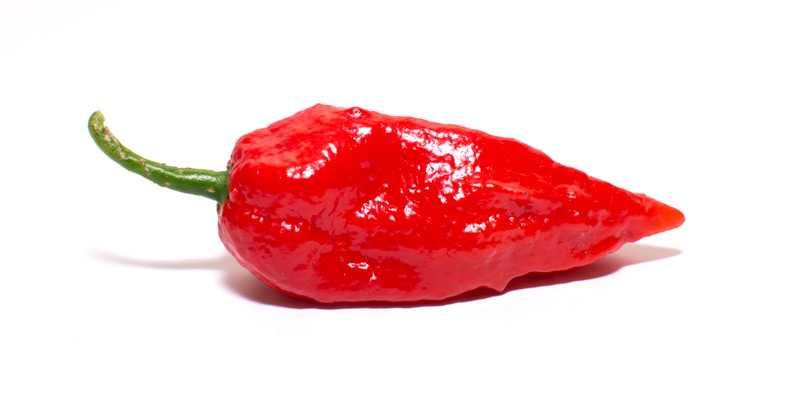 Jolokia - los 10 pimientos mas picantes del mundo